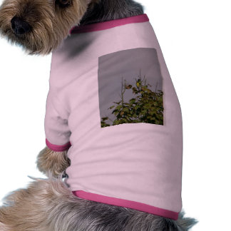 Parrots In Tree Top Dog Clothing