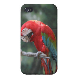 Parrots iPhone 4 Cases