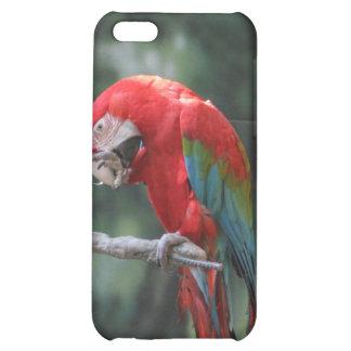 Parrots iPhone 5C Cases