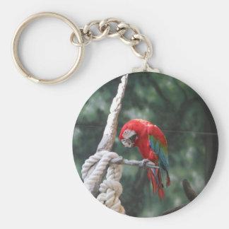 Parrots Keychain