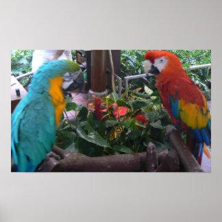 Parrots Loro Parque Tenerife Spain Print