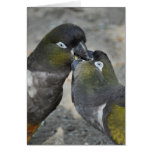 Parrots love - maps greeting card