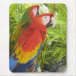 Parrots Mouse Pad