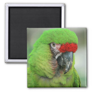 Parrots of the Caribbean Part Two 2 Inch Square Magnet