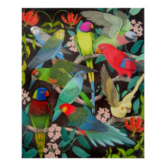 Parrots of the World II Poster
