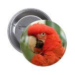 Parrots Pinback Button