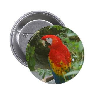 Parrots - scarlette macaw pins