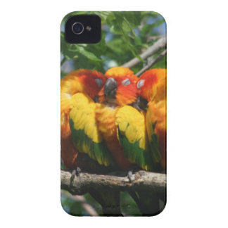 Parrots Snuggling iPhone 4/4S Barely There Case iPhone 4 Case-Mate Cases