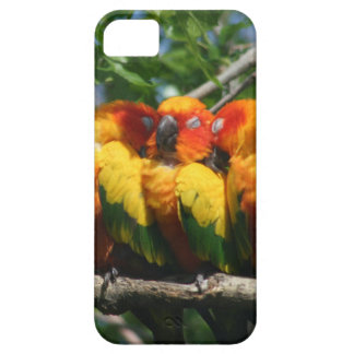Parrots Snuggling iPhone 5 Barely There Case