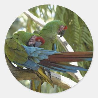 Parrots Round Stickers