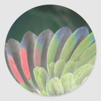 Parrot's Wing Classic Round Sticker