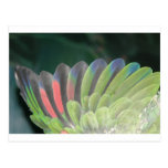 Parrot's Wing Postcards