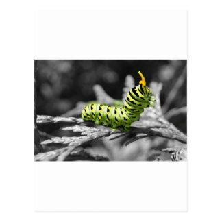parsley caterpillar black and white postcard