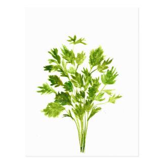 Parsley herbs Parsley print Postcard