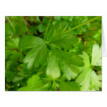 Parsley Leafy Green Herb Photography Card