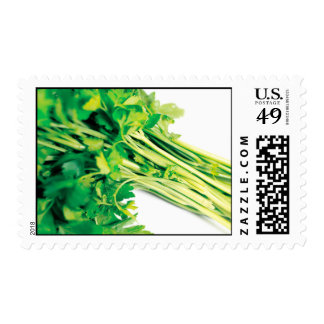 Parsley Postage Stamp