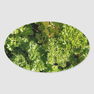 Parsley Oval Stickers