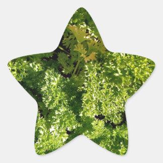 Parsley Star Sticker