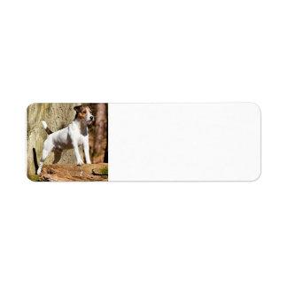 parson in woods.png return address label