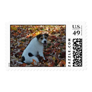 Parson Jack Russell Terrier Postage