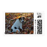 Parson Jack Russell Terrier Postage Stamp