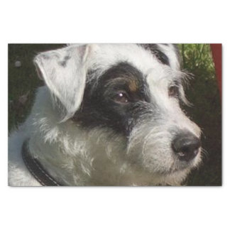 Parson_Russell_Terrier.png Tissue Paper
