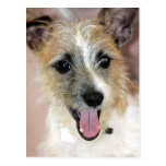 Parson Russell Terrier/Yorkie Mix Postcards