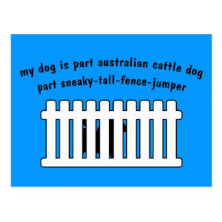 Part Australian Cattle Dog Part Fence-Jumper Postcard