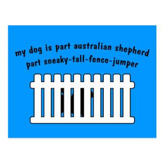 Part Australian Shepherd Part Fence-Jumper Postcard