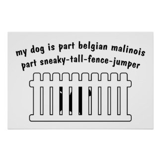 Part Belgian Malinois Part Fence-Jumper Poster