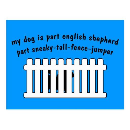 Part English Shepherd Part Fence-Jumper Postcards