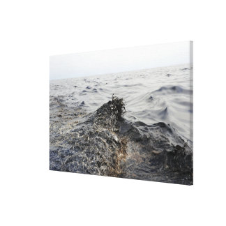 Part of an oil slick in the Gulf of Mexico Canvas Print