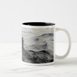Part of an oil slick in the Gulf of Mexico Mugs