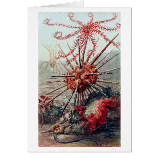 Parte inferior de mar con el pilluelo tarjeta de felicitación