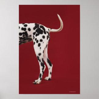 Parte posterior del Dalmatian Posters