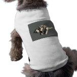 parte posterior posterized del gris del gato de ca ropa de perros
