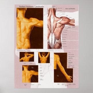 Parte posterior y hombro superficiales del poster