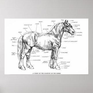 Partes del caballo poster
