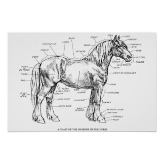 Partes del caballo póster