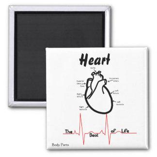 Partes del cuerpo -- Corazón humano Imán Cuadrado