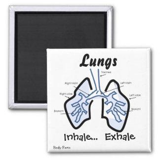 Partes del cuerpo -- Pulmones humanos Imán Cuadrado