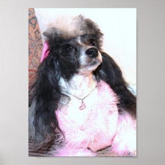 Parti Poodle Princess in Pink Poster