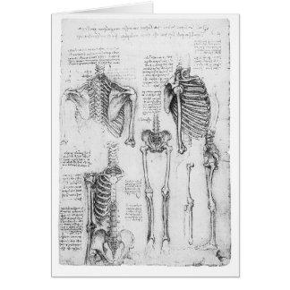 Partial Ribs and Pelvic Vintage Skeletal Diagram Greeting Card