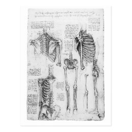 Partial Ribs and Pelvic Vintage Skeletal Diagram Postcard