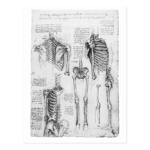 Partial Ribs and Pelvic Vintage Skeletal Diagram Post Card
