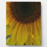 Partial Sunflower Photo Plaques