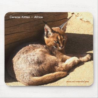 Partidario salvaje africano de la fauna del gato d tapete de raton
