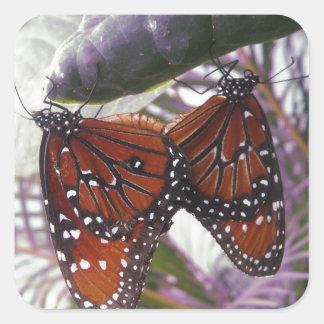 Partido del monarca calcomanías cuadradass personalizadas