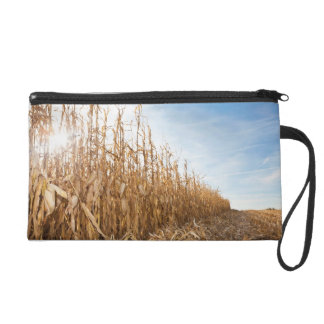 Partly Harvested Corn Field Wristlets