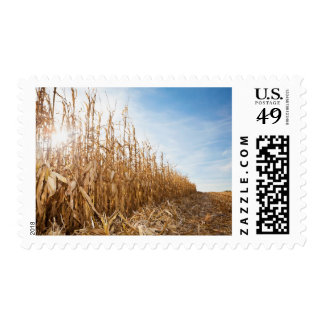 Partly Harvested Corn Field Postage